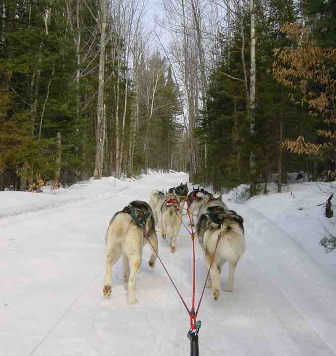 The view never changes - rear view of a sled team